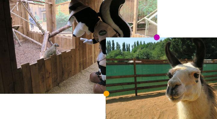 zoologicalgardens-sidlyswildlands